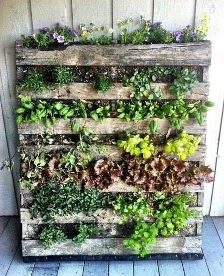 How-to-Build-a-Vertical-Wooden-Pallet-Herb-Garden